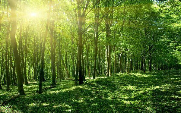 Пейзаж Sun Spring Green Forest