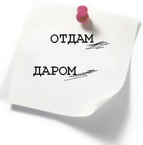Объявление «Отдам даром»