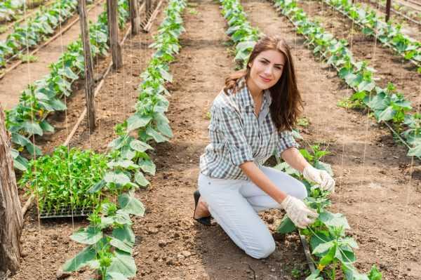 Девушка с рассадой
