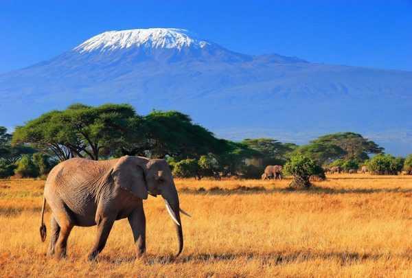 Слон на фоне Килиманджаро (приграничная с Кенией территория Танзании)