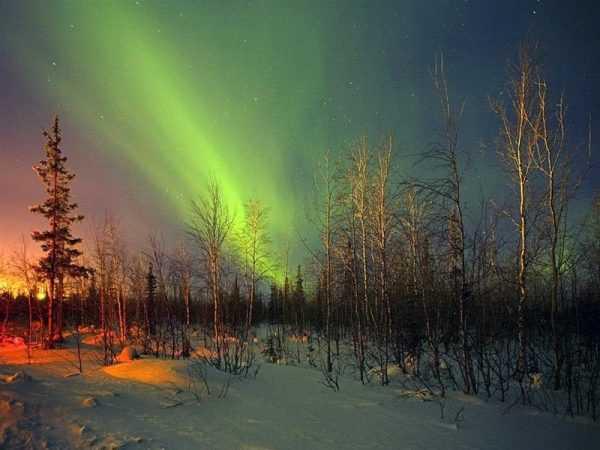 Северное сияние над лесом